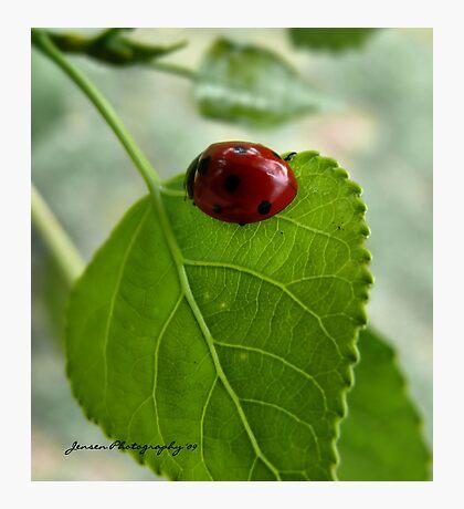 Little Lady   ( Ladybug series ) Photographic Print