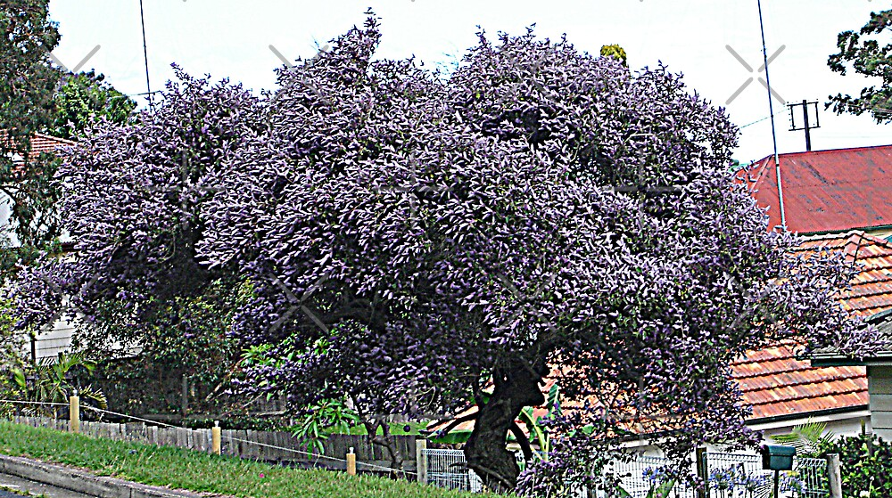 Purple Tree                                                                                                     from near me by KazM