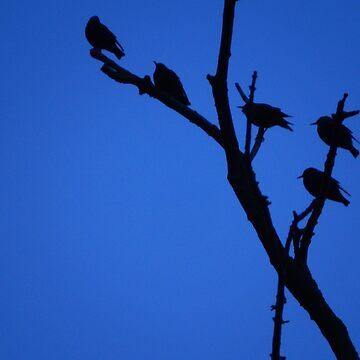 Birds aginst the Sky by Forfarlass