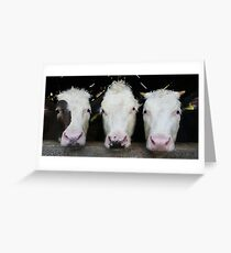 Three of a Kind Greeting Card