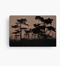 I see through the Trees Canvas Print