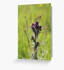Thistle do! Greeting Card