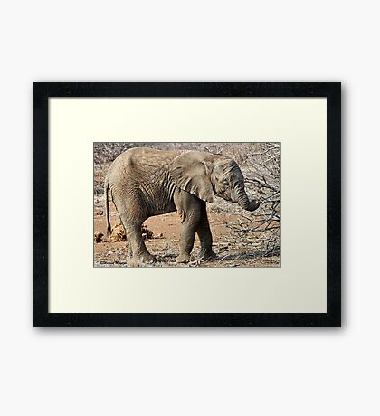 Hungry Baby Elephant -  THE AFRICAN ELEPHANT – Loxodonta africana Framed Print