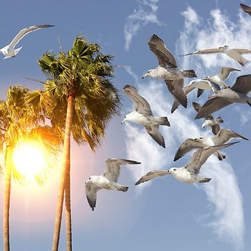 Seagull Flying Palm Trees by ezumeimages
