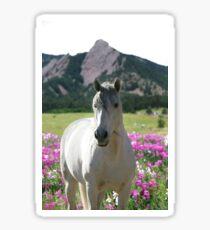 Stallion of the Front Range Sticker