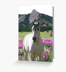 Stallion of the Front Range Greeting Card