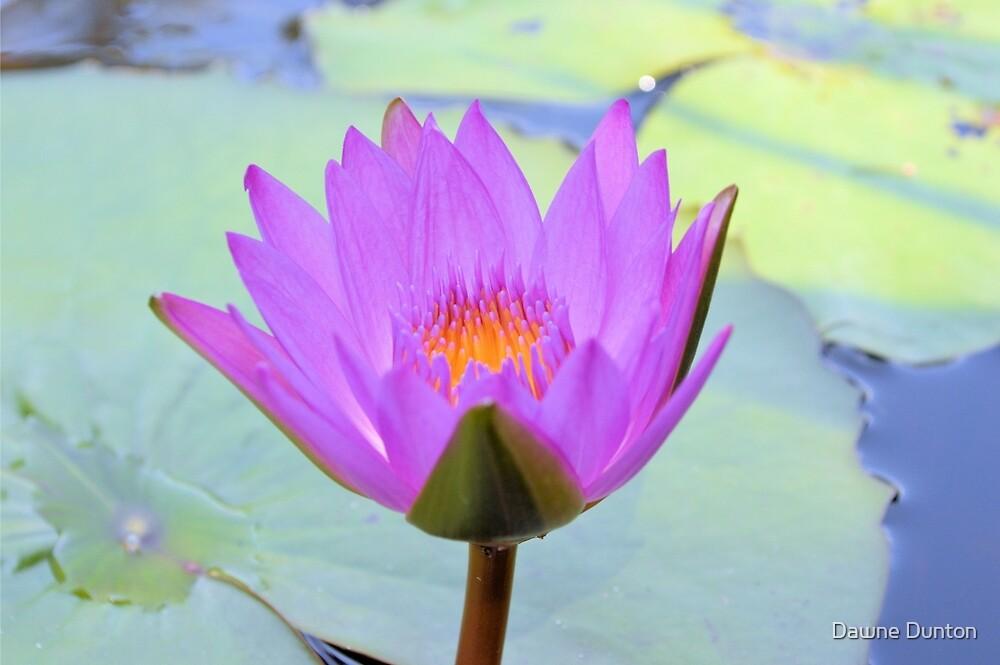 Lotus by ©Dawne M. Dunton
