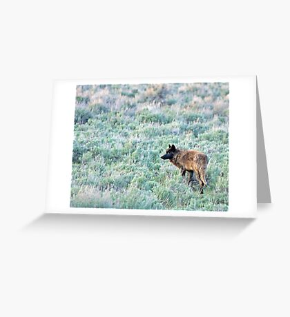 Lone Wolf, Lamar Valley of Yellowstone Greeting Card