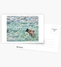 Lone Wolf, Lamar Valley of Yellowstone Postcards