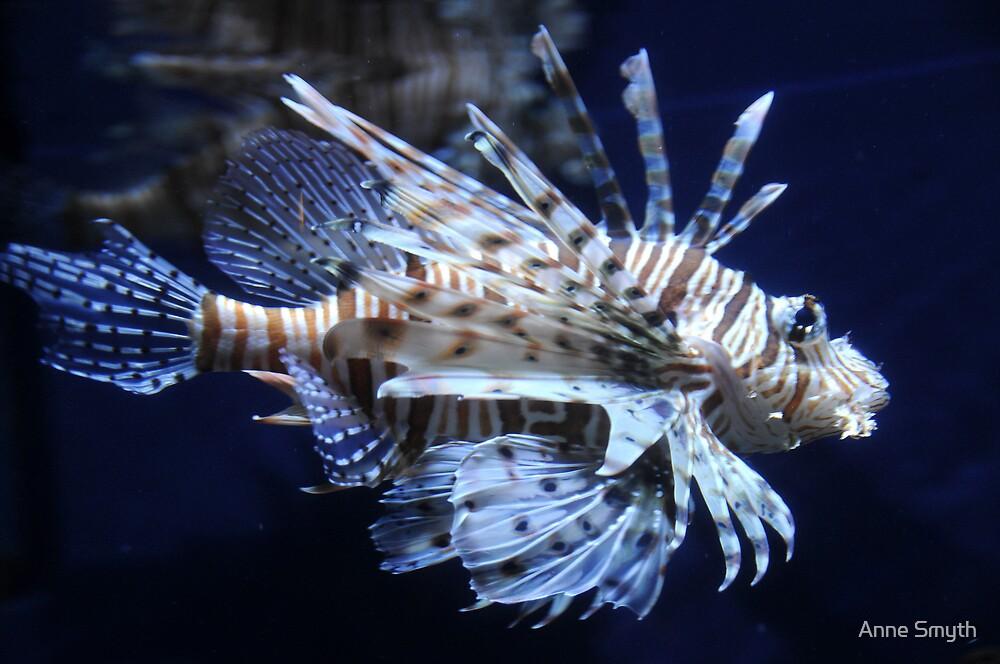 Lionfish by Anne Smyth