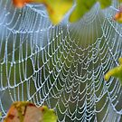 Spiderweb in the bushes by relayer51