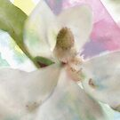 Magnolia White / another version  by bev langby
