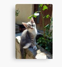 Gorgeous Stray Kitten Canvas Print
