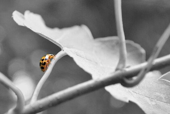 Lady Fly Away Home by ©Dawne M. Dunton