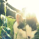 Catty Afternoon by MRPhotography