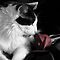 Selective Coloring (Cats Only)