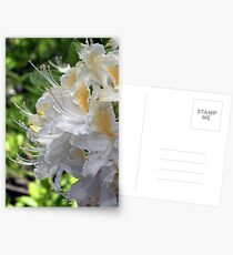 Rhododendron Postcards
