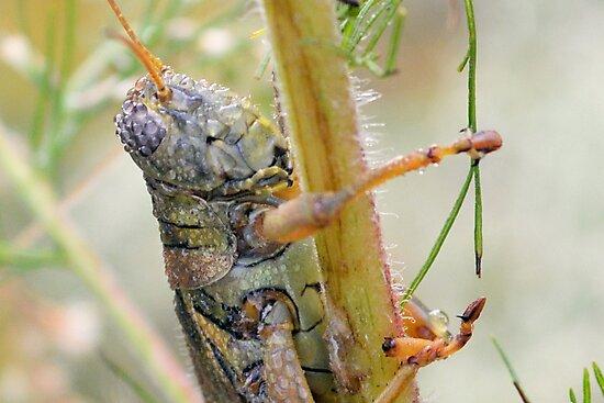 Dewey Grasshopper by Dawne Dunton