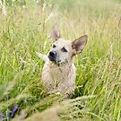Heeler Pup  - Diva by Mile57Imagery