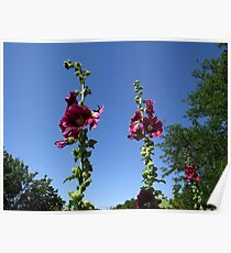 Hollyhocks in the Sky Poster