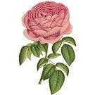 Rose by lorihinner