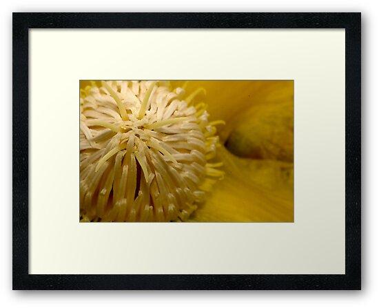 Yellow Flower by Amran Noordin