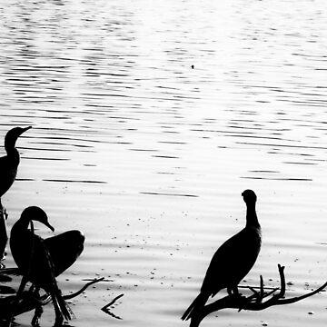 Three Birds on a Perch  by LeonidasBratini