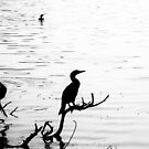 Birds at the Lake by LeonidasBratini