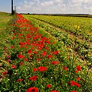 Poppy Border 1 by Geoff Carpenter