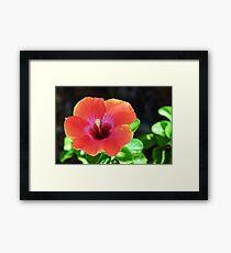 Hibiscus Bloom Framed Print