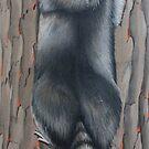 Raccoon  by Kim Donald
