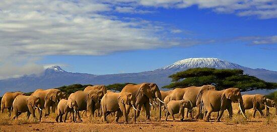 Kilimanjaro And Elephants Tanzania Kenya Africa  by 104paul