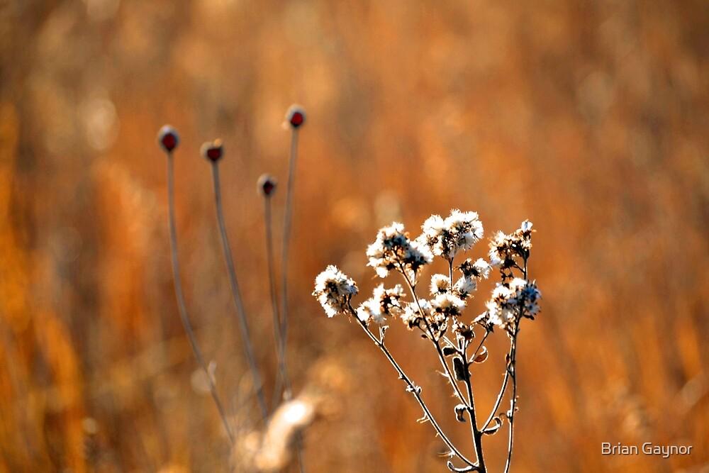 The Rhythm of Nature by Brian Gaynor