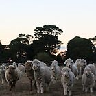 Meeting afew of the locals at Goulburn, NSW by LozzaElizabeth