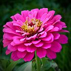 PINK MAKES THE GIRLS WINK by Marilyn Grimble