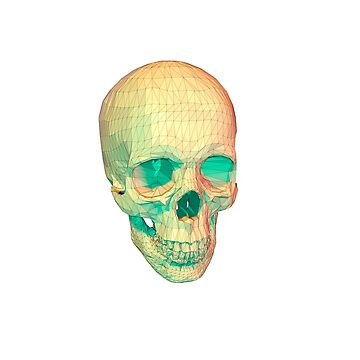 low poly lines skull by cavia