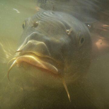 Carp underwater by mary02