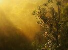 """""""Banksia in the Mist"""" by debsphotos"""