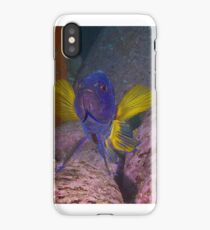 Skillion eastern blue devil iPhone Case