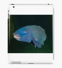 Skillion Cave Terrigal Grouper iPad Case/Skin