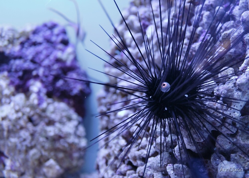 Marine Sea Urchin by AnnDixon