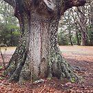 The Mighty Oak by Linda Lees
