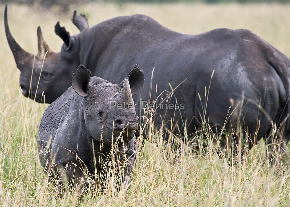 Inquisitive Rhino by Peter Denness