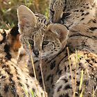 Serval family by ChrisCoombes