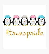 trans pride penguins Photographic Print