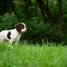 My Theodore ~The English Springer Spaniel~ 2 by Gypsykiss