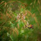 The Monarchs Return by Lois  Bryan