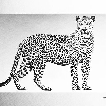 Black Leopard on White Canvas by Captain7