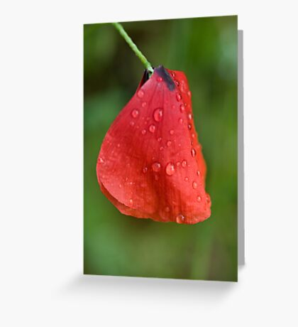 Poppy in tears Greeting Card