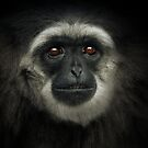 Silvery Gibbon by Natalie Manuel